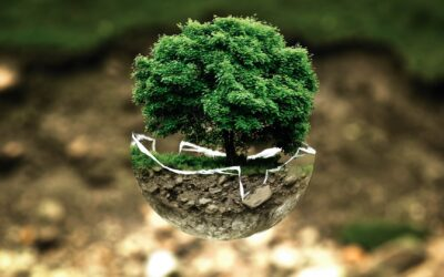 L'enseignement et la formation dans la transition écologique et sociétale